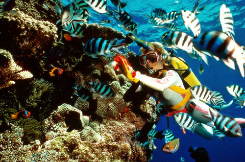 Red_Sea_Diving